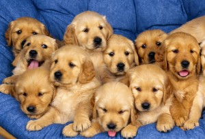 Как выбирать щенка