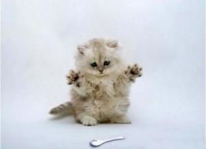 Что нужно котенку