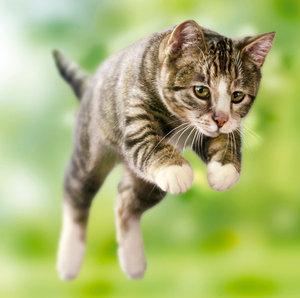 Упражнения для кошек