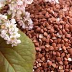 Полезные свойства гречки, экологически чистого продукта
