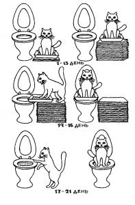 как приучить кота к унитазу