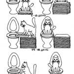 Как приучить кота к унитазу? Легко и просто, хотя и долго.