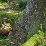 Где нужно искать грибы в лесу