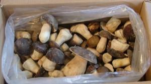 Какие грибы можно замораживать