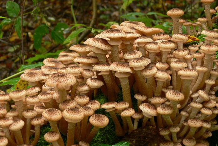 грибы у человека
