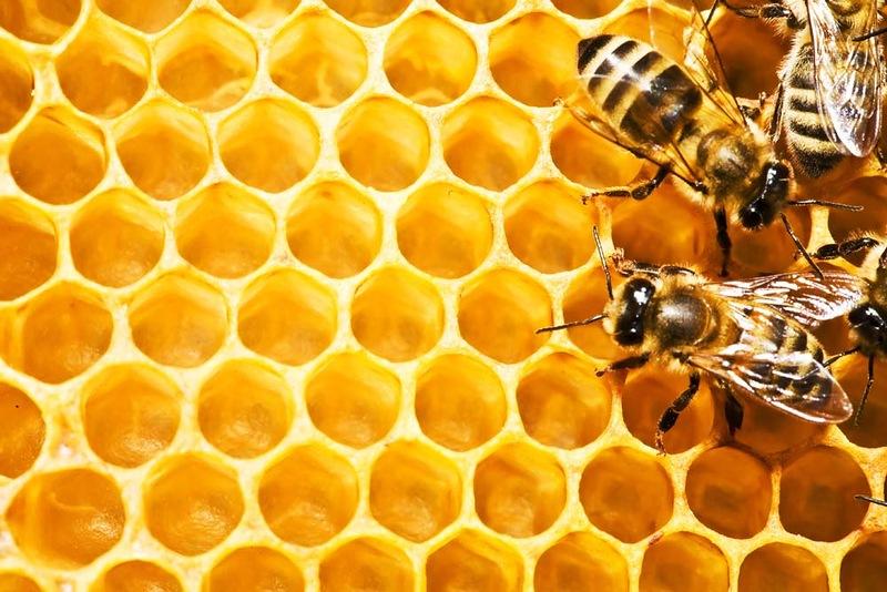 можно ли есть мед при высоком холестерине