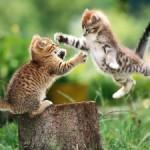 Как отличить котят мальчиков от девочек