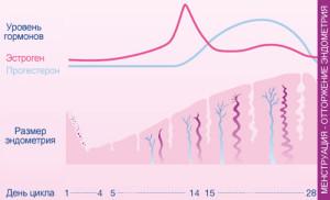 Сколько длится цикл месячных