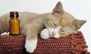 как определить глисты у кошки