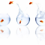 Особенности содержания золотых рыбок и как отличить самку золотой рыбки от самца