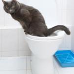 Как приучить кошку к унитазу за 20 дней
