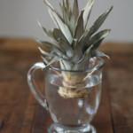 Правила самостоятельного выращивания ананаса