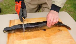 Как чистить щуку от чешуи