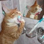 Особенности ухода за зубами, глазами и ушами кота и кошки